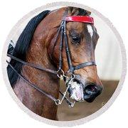Arabian Show Horse 5 Round Beach Towel