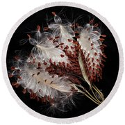 Round Beach Towel featuring the photograph Asclepias Currasavica--seed Pod by Ann Jacobson