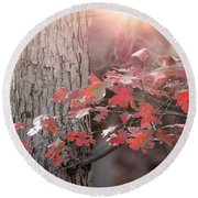 Autumn In The Woods Round Beach Towel