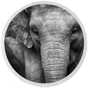 Baby Elephant Round Beach Towel by Charuhas Images