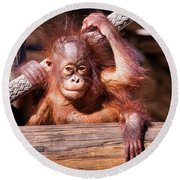 Baby Orangutan Round Beach Towel