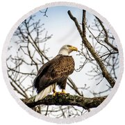 Bald Eagle Majesty Round Beach Towel