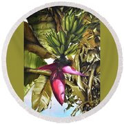 Round Beach Towel featuring the painting Banana Tree by Chonkhet Phanwichien