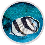 Round Beach Towel featuring the photograph Banded Butterflyfish by Perla Copernik
