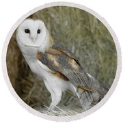 Barn Owl On Hay Round Beach Towel