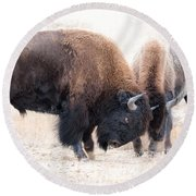 Battle Of The Bison In Rut Round Beach Towel by Yeates Photography