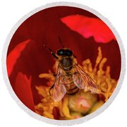 Round Beach Towel featuring the photograph Bee by Jay Stockhaus