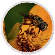 Round Beach Towel featuring the photograph Bee On Flower by Jay Stockhaus