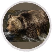 Beryl Springs Sow In The River Round Beach Towel