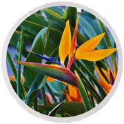 Bird Of Paradise Round Beach Towel by Craig Wood