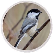 Black Capped Chickadee Round Beach Towel