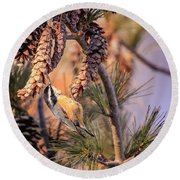 Round Beach Towel featuring the photograph Black-capped Chickadee by Peter Lakomy