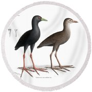 Round Beach Towel featuring the drawing Black Crake, Zapornia Flavirostra by J D L Franz Wagner