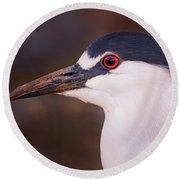 Black-crowned Night Heron  Round Beach Towel
