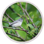 Round Beach Towel featuring the photograph Blue-gray Gnatcatcher by Gary Hall