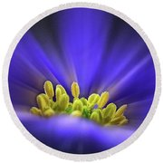 blue Shades - An Anemone Blanda Round Beach Towel