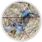 Bluebird Battle Round Beach Towel by Mike Dawson