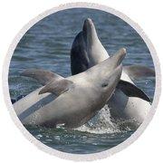 Bottlenose Dolphins  - Scotland  #15 Round Beach Towel