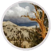 Bristlecone Pine Tree 7 Round Beach Towel