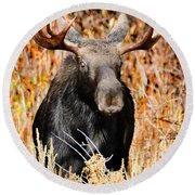 Bull Moose Round Beach Towel