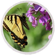 Butterfly Round Beach Towel by David Stasiak