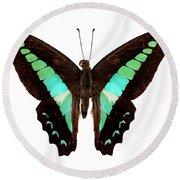 Butterfly Species Graphium Sarpedon Round Beach Towel