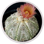 Cactus Flower 4 Round Beach Towel