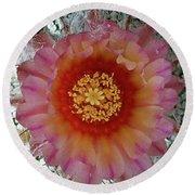 Cactus Flower 5 Round Beach Towel