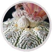 Cactus Flower 6 Round Beach Towel