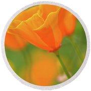 California Spring Poppy Macro Close Up Round Beach Towel
