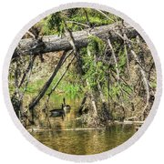 Round Beach Towel featuring the photograph Canada Geese by Jim Sauchyn