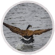 Canada Goose Round Beach Towel by Ray Congrove