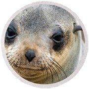 Cape Fur Seal Arctocephalus Pusillus Round Beach Towel