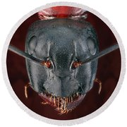 Carpenter Ant Round Beach Towel by Matthias Lenke