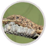 Caterpillar And Parasitic Wasp Eggs Round Beach Towel