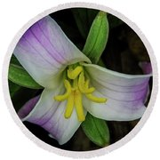 Catesby Trillium Round Beach Towel by Barbara Bowen
