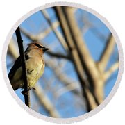 Cedar Wax Wing Round Beach Towel by David Arment