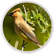 Cedar Waxwing Closeup Round Beach Towel by Adam Jewell