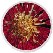 Chrysanthemum 'alabama' Round Beach Towel