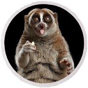 Close-up Lemur Slow Loris Isolated Black Background Round Beach Towel