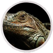 Closeup Green Iguana Isolated On Black Background Round Beach Towel by Sergey Taran