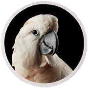 Closeup Head Of Beautiful Moluccan Cockatoo, Pink Salmon-crested Parrot Isolated On Black Background Round Beach Towel