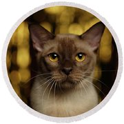 Closeup Portrait Burmese Cat On Happy New Year Background Round Beach Towel