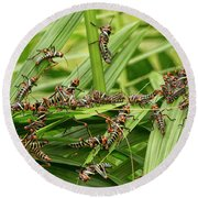 Collared Lubber Grasshoppers Round Beach Towel