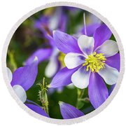 Colorado Columbines Round Beach Towel by Teri Virbickis