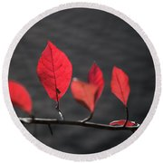 Colorful Tree Leaves Changing Color For Auyumn,fall Season In Oc Round Beach Towel