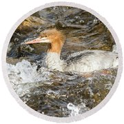 Common Merganser Round Beach Towel
