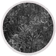 Compass Plant Round Beach Towel by Tim Good