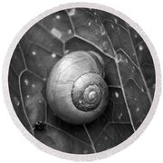 Round Beach Towel featuring the photograph Conch by Jouko Lehto