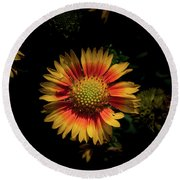 Round Beach Towel featuring the photograph Coneflower by Jay Stockhaus